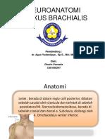 Ppt Pleksus Brachialis