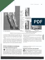Anatomia clinica Membrul superior.pdf