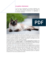 Historia de Los Gatos Siameses