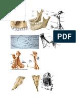 Huesos Columna Vertebral, Costillas y Esternon