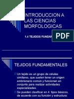 1.4 Tejidos Fundamentales