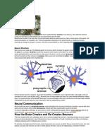Neurons.docx