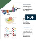 biolo celula