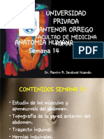 Anatomía semana14