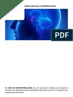 5. Endocrinología Fichas Berna