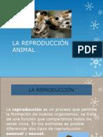La Reproducción Animal