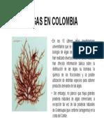 Algas en Colombia