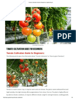 Tomato Cultivation Guide for Beginners _ Agrifarming