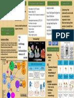 Tumor Immunology