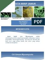 MYXOMYCOTA (Jamur Lendir)