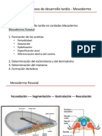 Clase 5 Mesodermo I