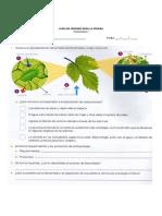 guia 6° - fotosintesis