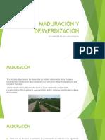 Antecedentes de Maduracion y Deaverdizacion