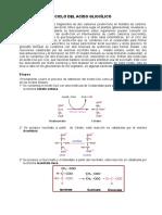 2017 Ciclo Ac Glioxilico via Pentosas
