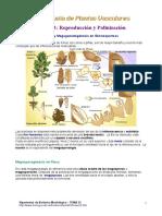 Plantas vasculares (reproduccion y polinizacion)
