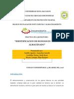 HONGOS EN GRANO ALMACENADO.docx