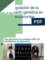 Clase 23 Tema Vii Regulacion de La Expresion Genetica en Eucariontes