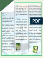 triptico_vazquez-sosa-daniel (1).docx