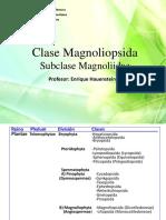 1 Magnoliidae