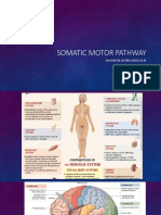 Somatic Motor Pathway by Raf