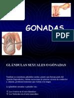 Hormonas Sexuales, Sistema Endocrino Ytiroides
