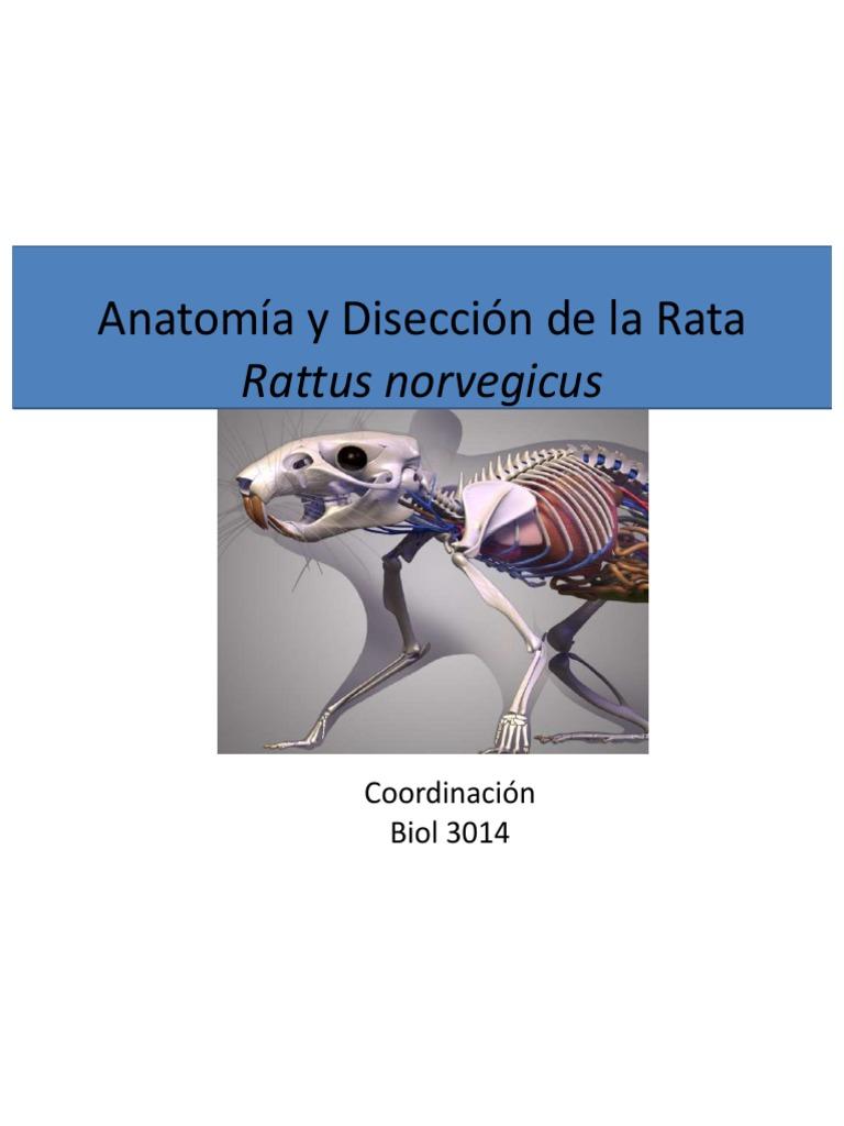 Excepcional Anatomía Externa Rata Molde - Imágenes de Anatomía ...