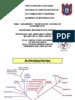 Seminario de Actinomicetos.