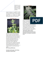 Paisa Grow Seeds catálogo.pdf