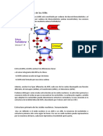 Estructura Del ADN y de Los ARNs