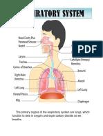 respiratory system.docx