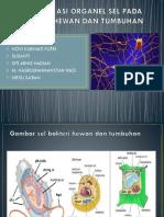 Identifikasi Organel Sel Pada Bakteri Hewan Dan Tumbuhan