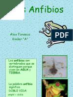los-anfibios-1218490291210897-8.ppt