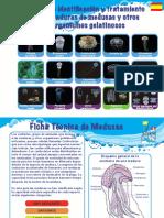 26.Jellyfish Guide 2014 - Spain (spanish).pdf