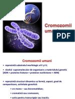 Cromozomii umani ROM.pptx