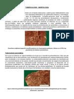 Tuberculosis Morfologia