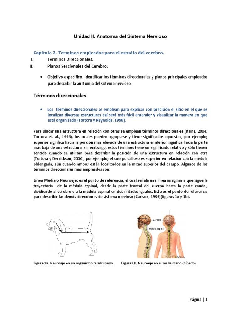 Famoso Anatomía Y Fisiología Términos Direccionales Cuestionario ...