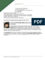 2005_10_kertesz.doc
