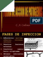 14.CAPITULO XII Modo de Accion de Patogenos