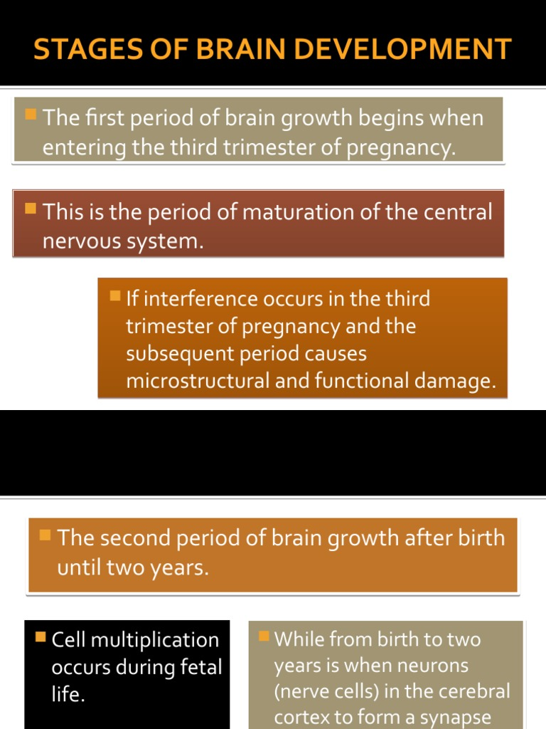 STAGES OF BRAIN DEVELOPMENT ppt by melf.pptx