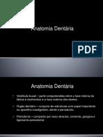 Anatomia Dentaria Aula2 m3