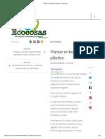 Plantar en Botellas de Plástico _ Ecocosas