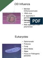 14+Eukaryotes+Viruses.ppt