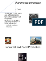 22+Industrial+and+Food+Production.ppt