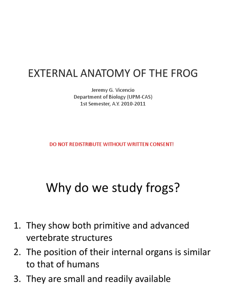 External Anatomy of the Frog | Anatomical Terms Of Location | Frog