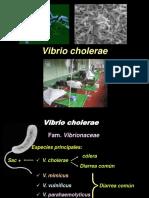 Vibrio 190417