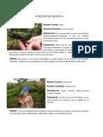 Colibries de Nicaragua