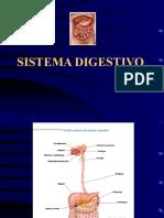 11. Sistema digestivo.ppt