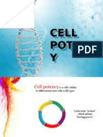 Cell Potency and Its Types