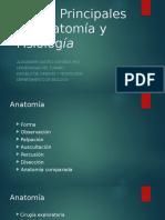 PresTemas Principales en Anatomia y Fisiologia (1).pptx