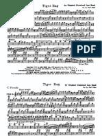 TigerRag.pdf